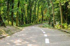Paved path for walking and jogging among the trees with white paint marking pointer in the park Znesinnya in Lviv on Kaiserwald. Paved path for walking and royalty free stock photos