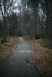 A paved path in a winter forest with barren trees. And dried leaves Stock Photo