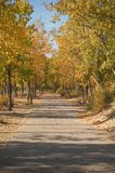 Paved pathway in Autumn Stock Image