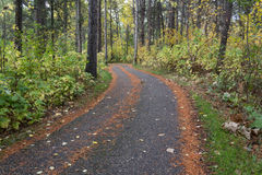 Paved pathway through a forrest. With autumn colours Royalty Free Stock Photo
