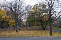 Paved road across Central Park, New York. Photo shot from inside Central Park in New York Stock Images