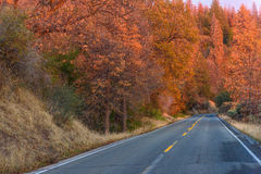 Paved road with autumn trees on both sides Royalty Free Stock Photography
