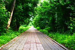 Paved road backdrop with green trees Stock Photos
