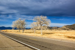 Paved road. With bare trees Royalty Free Stock Photos