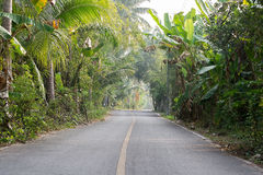 Paved road in the Coconut Royalty Free Stock Images