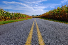 Paved Road Through Corn Field Stock Images