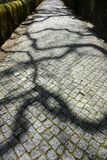 Paved road in the forest with branch shadows. Wide angle view of paved road in the forest with enigmatic shadows Royalty Free Stock Photos