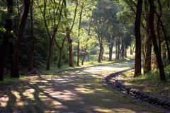 Paved road through forest Stock Photography