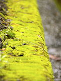 The paved road with moss Stock Photos