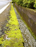 The paved road with moss Stock Images