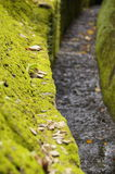 The paved road with moss Royalty Free Stock Image