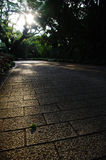 Paved road in natures. With sunrays throught the trees Royalty Free Stock Photo