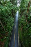 Paved road in the rainforest royalty free stock photography