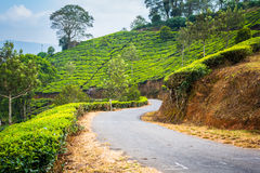 Paved road through tea plantation in India Stock Photo