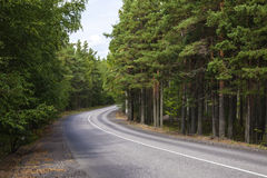 Paved road in the woods stock image Royalty Free Stock Photo