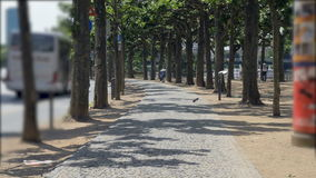 Paved Sidewalk Lined with Plane Trees by the Main River. Filming a sidewalk close to the Main river in Frankfurt. The sidewalk is lined with plane trees stock video