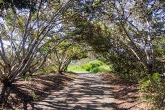 Paved trail under trees, Shoreline Park, Mountain View, San Francisco bay, California stock photo