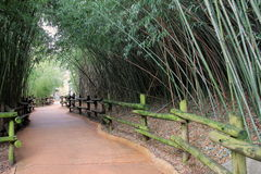 Paved walkway with fencing and bamboo Stock Photos