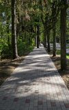 A paved walkway among the tree lane royalty free stock images