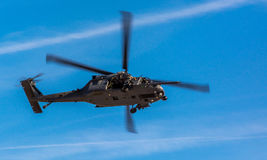 Pavehawk Royalty Free Stock Images