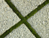 Pavement. Green cross from the moss on pavement royalty free stock image