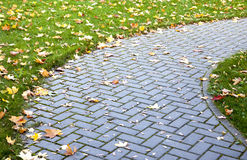 Pavement in autumn. Detail of pavement and green grass covered in yellow leaves in autumn Stock Photo