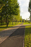 Pavement in autumn park Stock Photography