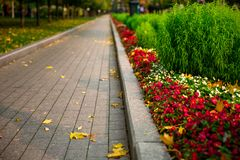 Pavement in the flower garden in autumn stock photo