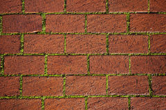 Pavement with Grass Royalty Free Stock Photo