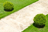 Pavement grass Stock Photos