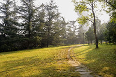 Pavement in grassy lawn in warm winter morning Stock Images