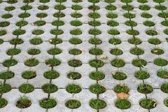 Pavement with holes filled with grass. Decorative pavement with holes filled with grass Royalty Free Stock Photos