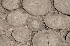 Pavement made of cut down trees. stock photography