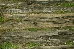 Old tree trunks lying on the ground Royalty Free Stock Photos