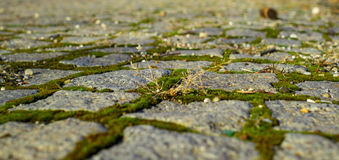 Pavement. Old pavement with grass less traveled Royalty Free Stock Photos