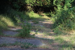 Pavement overgrown with Weeds Stock Images