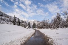 Pavement Road Surrounded by Snow and Pine Trees Royalty Free Stock Photography