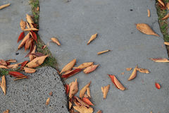Pavement or sidewalk tiles with dry autumn leaves, top view Stock Photos