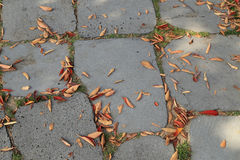 Pavement or sidewalk tiles with dry autumn leaves. Royalty Free Stock Images