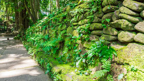 Pavement with stone wall in monkey forest, ubud Stock Photos