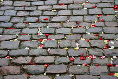 Pavement stones. Grey cobble stones with rose leafs Royalty Free Stock Image