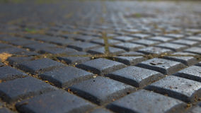 Pavement tiles in a garden Stock Photography