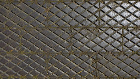 Pavement tiles in a garden Stock Photos