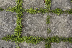 Pavement tiles and green grass Royalty Free Stock Image