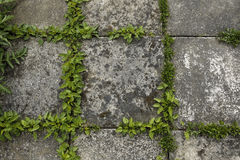 Pavement tiles and green grass Stock Images