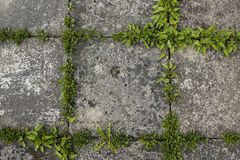 Pavement tiles and green grass Royalty Free Stock Photo