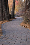 Paver Path through the Trees in Autumn. A paver path winding through Ponderosa Pine trees and Autumn foliage with pine cones and pine needles on the ground Stock Photo