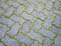 Paver pattern. Moss outlining sidewalk pavers forms a pattern Royalty Free Stock Images