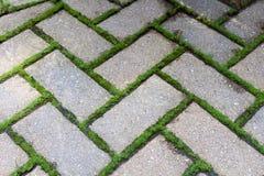 Pavers τούβλου με το βρύο Στοκ φωτογραφία με δικαίωμα ελεύθερης χρήσης