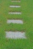 Pavers concretos na grama alta Foto de Stock